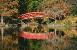orange and white bridge